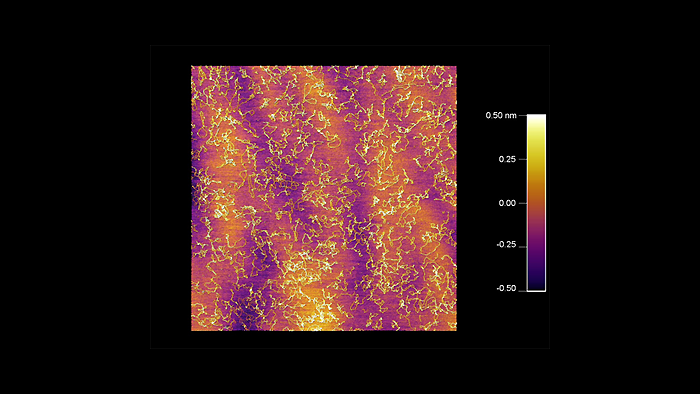 Topography image of dried DNA taken with a Tap300Al-G probe on an Asylum Cypher AFM