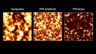 Topography (left), PFM amplitude (center) and PFM phase (right) images of polycrystalline Pb(Zr0.3Ti0.7)O3 thin film