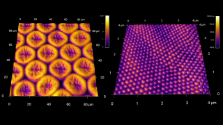 Large scale structure of a desiccated compound butterfly eye (left) and fine nanostructure completely covering the facets (right)