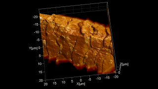 A contact mode topography image rendered in 3D and overlaid with the Lateral Force Microscopy image shows nicely the scales' morphology as well as some hairspray droplets on a human hair.